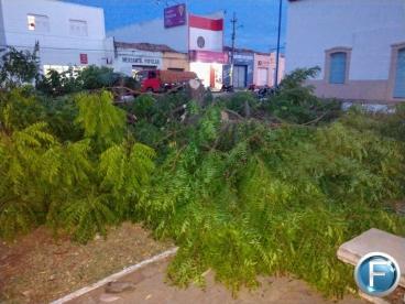 Corte e poda de árvores na Praça Mafrênse causa polêmica em Oeiras