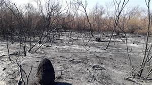 Piauí registra maior número de queimadas desde 2012, diz INPE